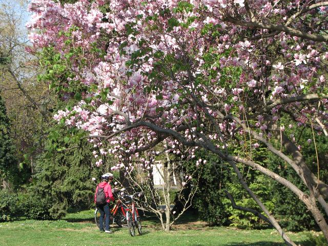 Kevät puhkesi